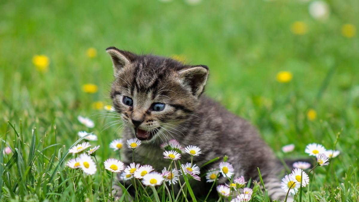 Alergias en mascotas