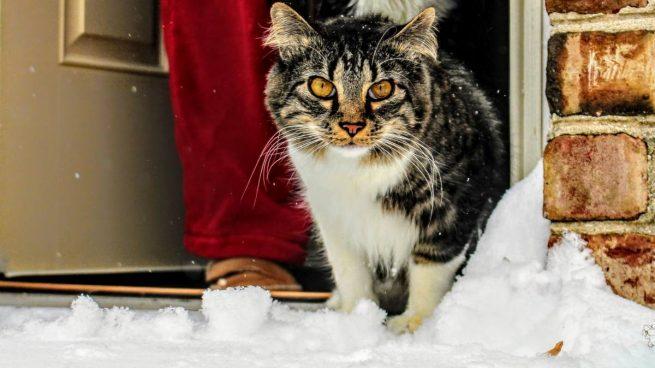 Gato, temperatura exterior