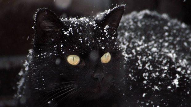 Temperatura exterior gato