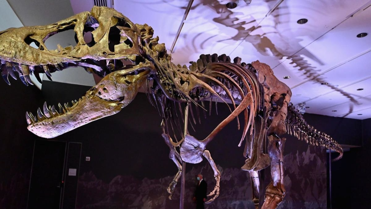 Esqueleto del dinosaurio 'Stan'