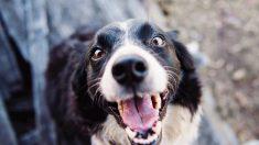 Tips sobre la ansiedad en tu perro