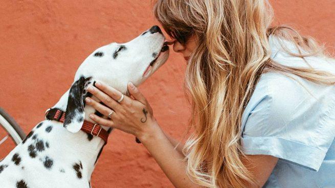Masajes a tu perro