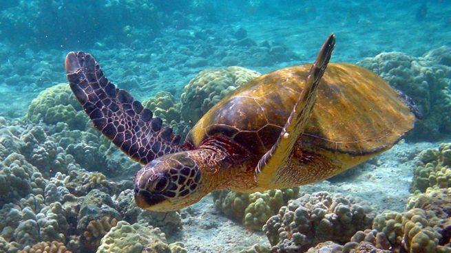 La curiosa razón por la que el calentamiento global favorece a las tortugas hembra