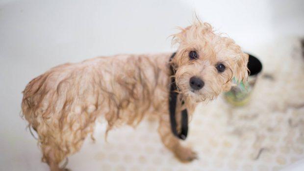 Tips para bañar perro