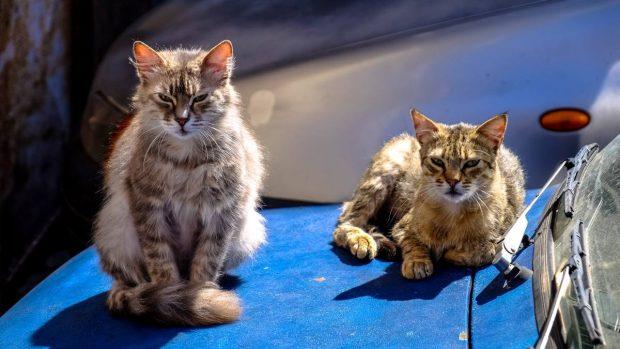 Dos mascotas en casa