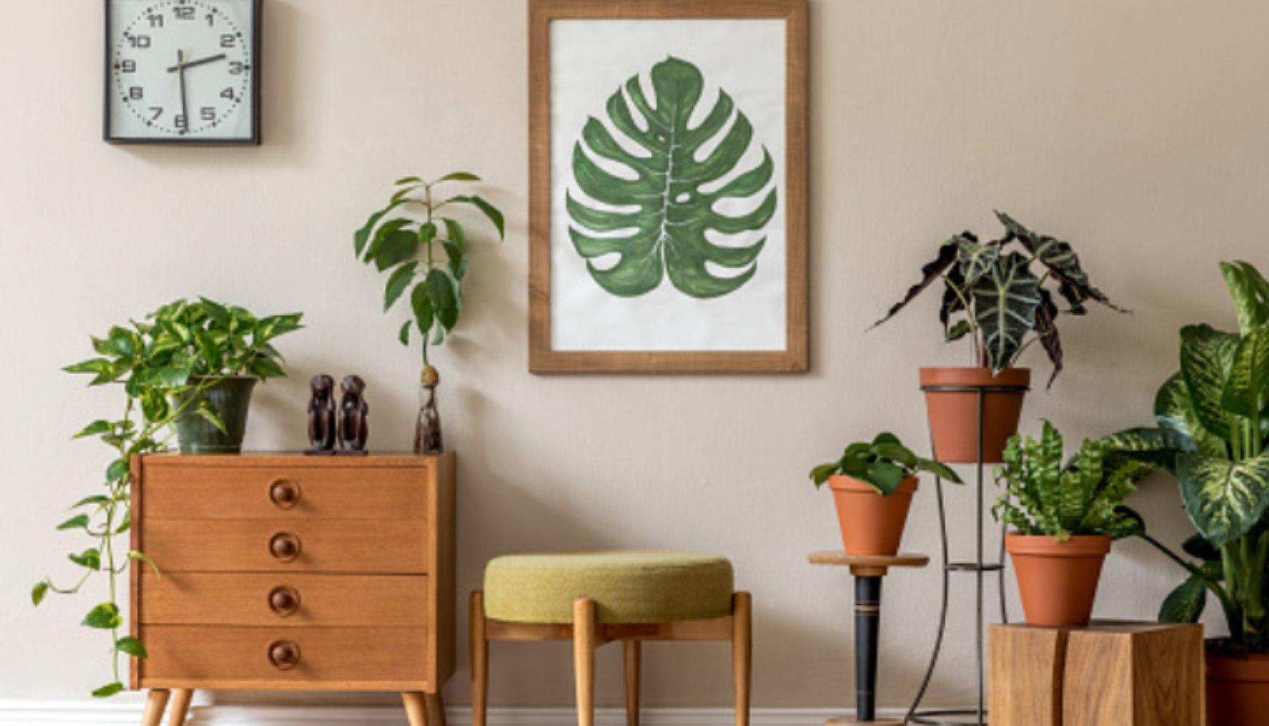 Cómo decorar con plantas de interior y flores resistentes