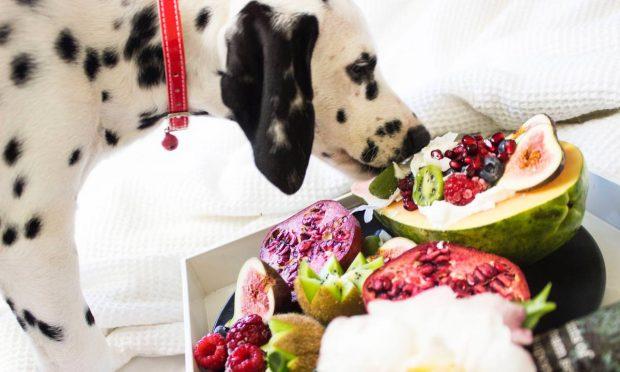 Dietas para tu mascotas