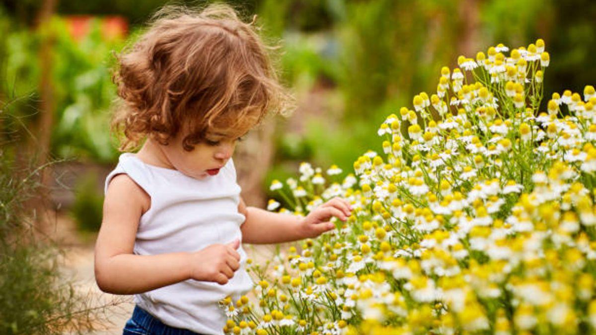 Las plantas que es mejor evitar si tenemos niños pequeños