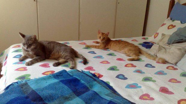 Gatos en cama personas