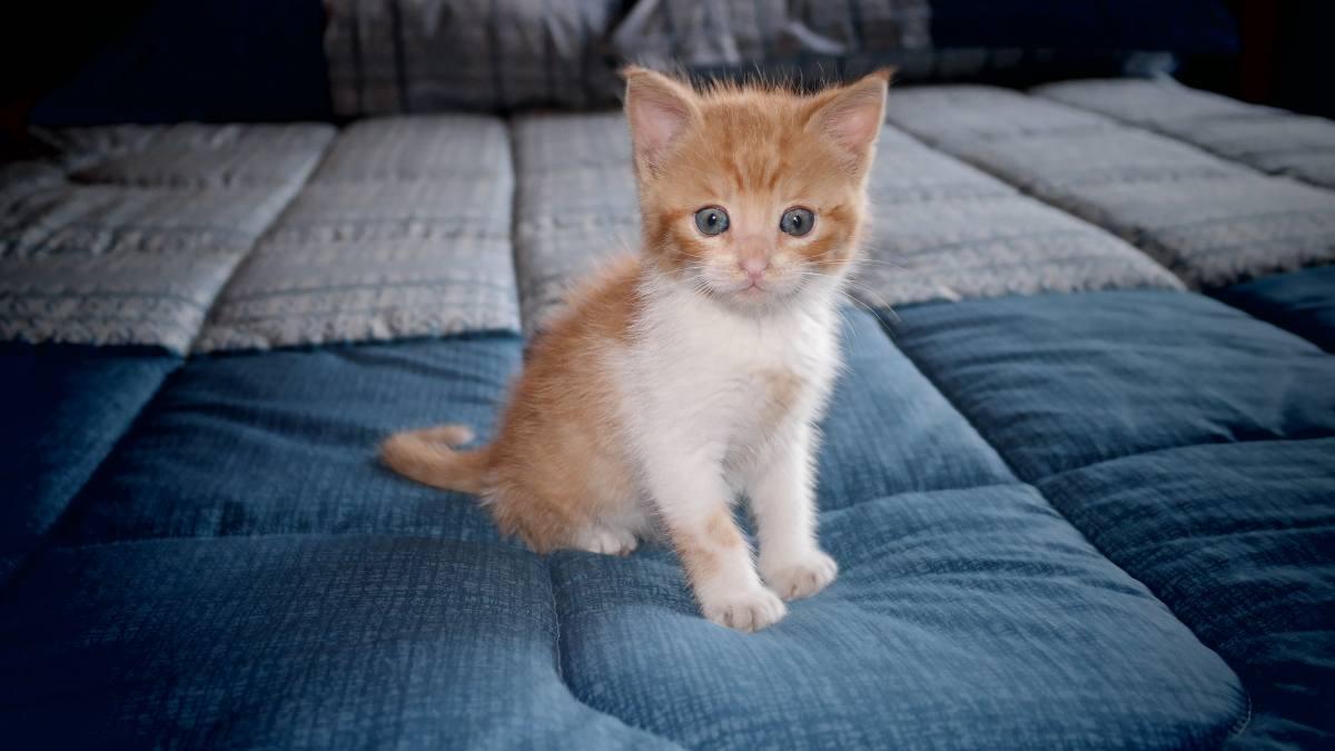 Evita que tu gato esté en tu cama