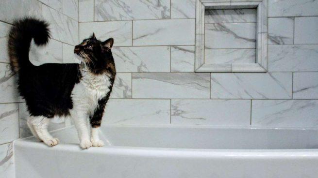 bañar a un gato con pulgas