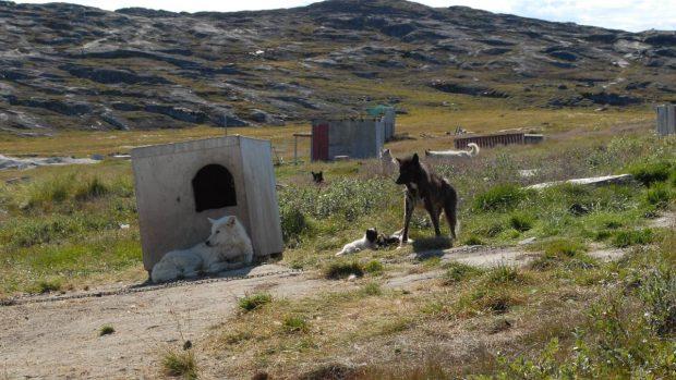 Razas de perros: Groenlandia