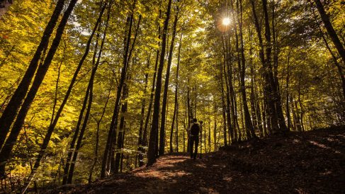 5 cosas que puedes hacer para ayudar la conservación de bosques