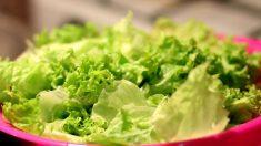 La lechuga es uno de los alimentos más consumidos