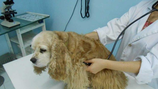 Vacuna de perros
