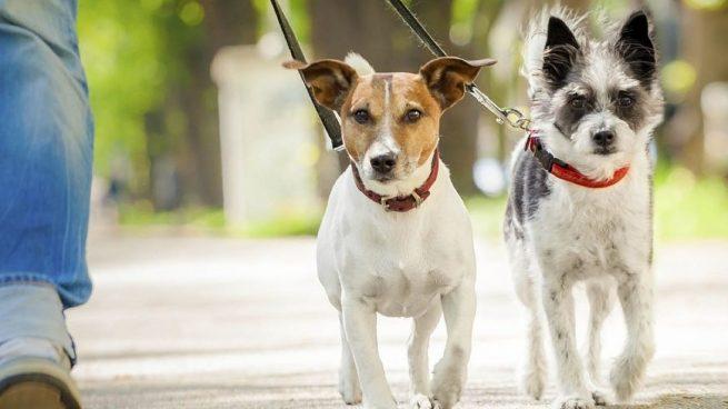 Se puede sacar a pasear al perro durante las horas del toque de queda