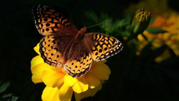 Mariposa y biodiversidad