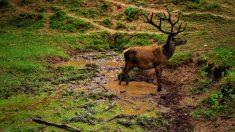 Fauna y la biodiversidad