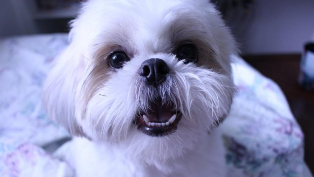 Perro suelta pelo