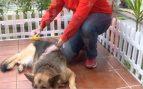 Perro muda pelo