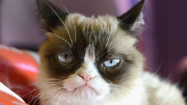 Estas son las 8 cosas que más asustan a los gatos