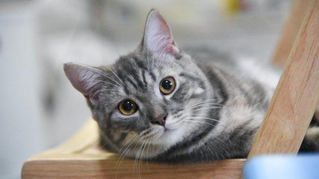 Instagram: Barcelona registra el primer refugio de gatos de personas que han fallecido por el coronavirus