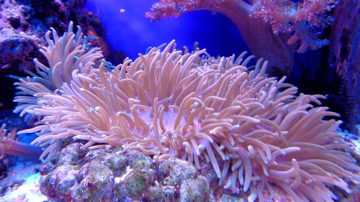 Importancia supervivencia coral