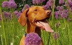 Perro en jardín