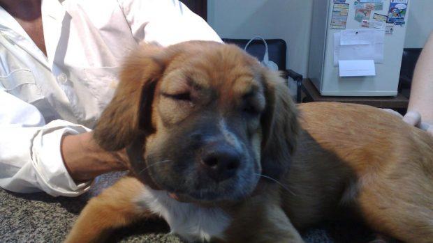 Alergias en tu perro