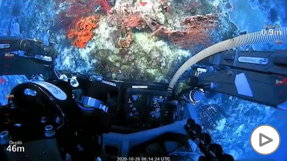 Descubren un arrecife de coral más alto que la Torre Eiffel en Australia.