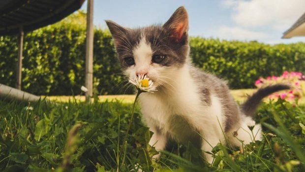 Gato y flor