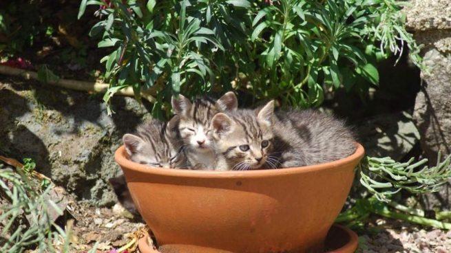 Gatos en jardín