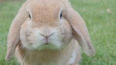 Las mejores razas de conejos para niños_ TOP 5