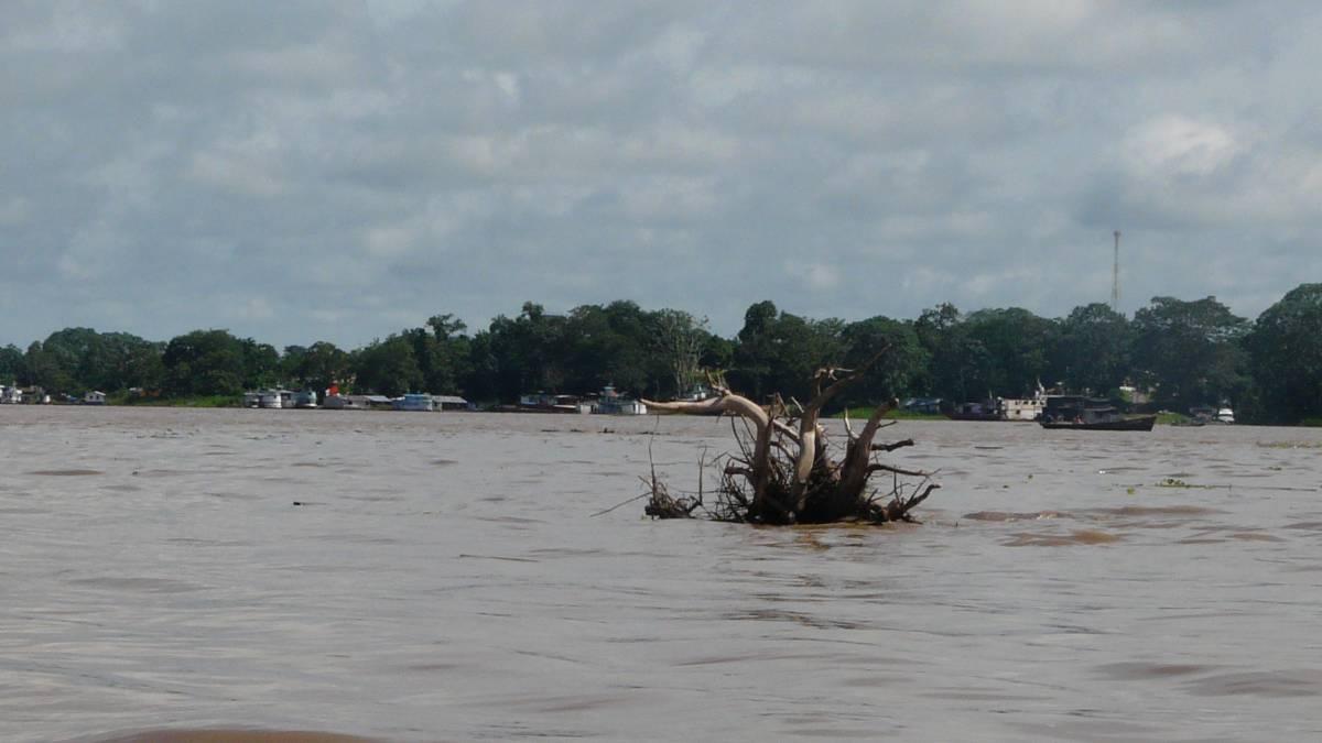 Se deforesta el Amazonas