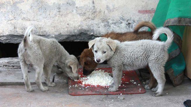 Perros comen