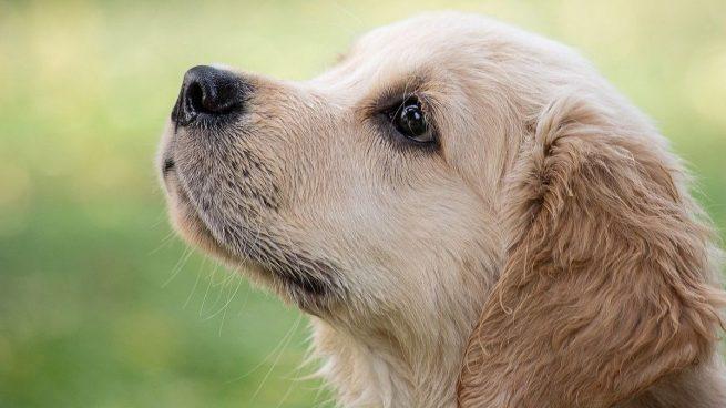 Qué cuidados necesitan los perros en otoño