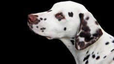 Perros curiosos con colores y manchas