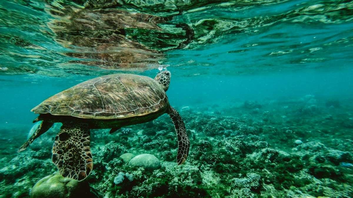 Las tortugas pueden vivir más de 100 años