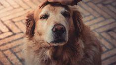 Zonas para acariciar a un perro