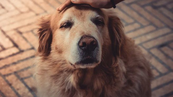 Caricias a perro