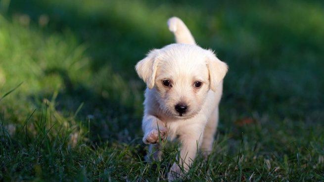 Estas son las 5 razas de perros más comunes en los hogares en España