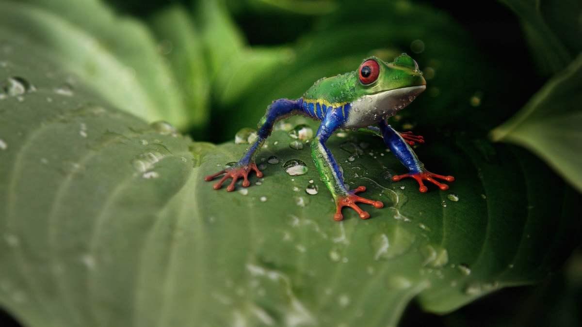 Nuevas especies exóticas