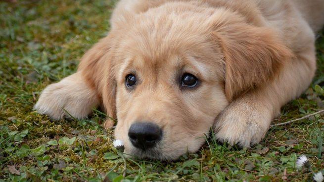 5 motivos por los que los perros pueden oler mal