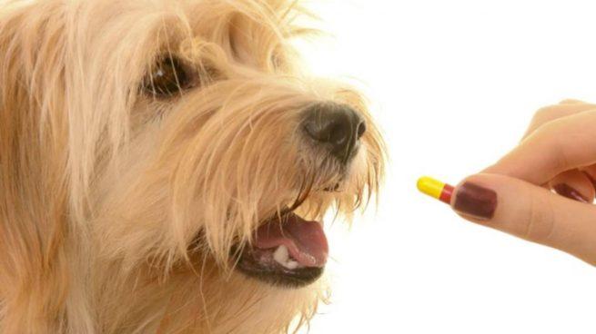 Medicamentos mascota