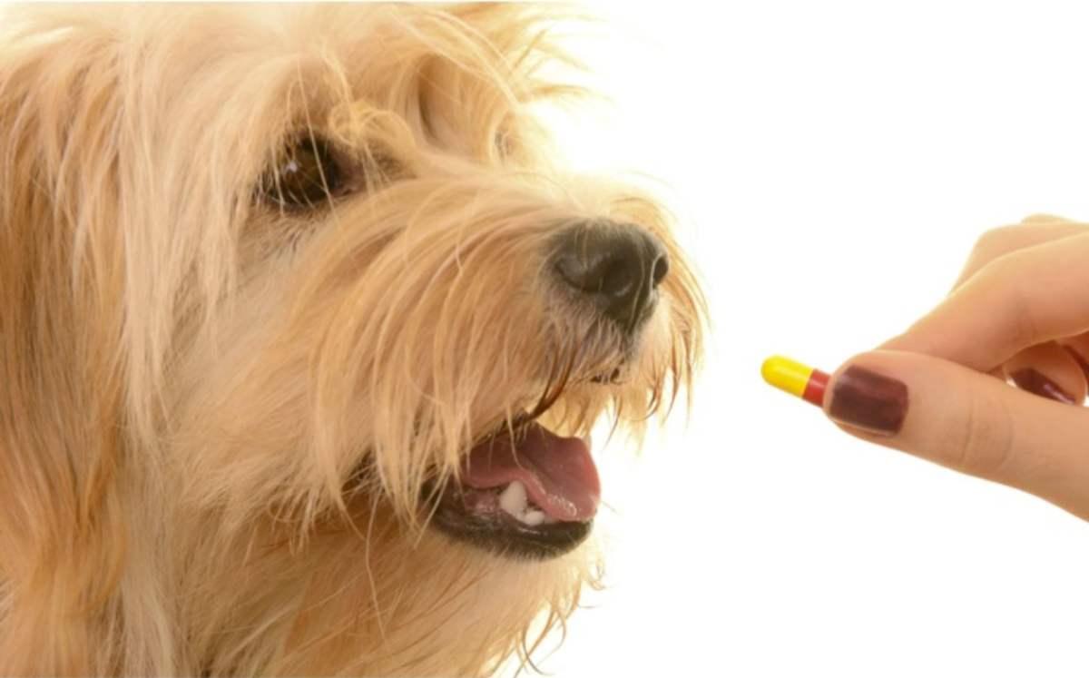 Fármacos con riesgo para tu mascota
