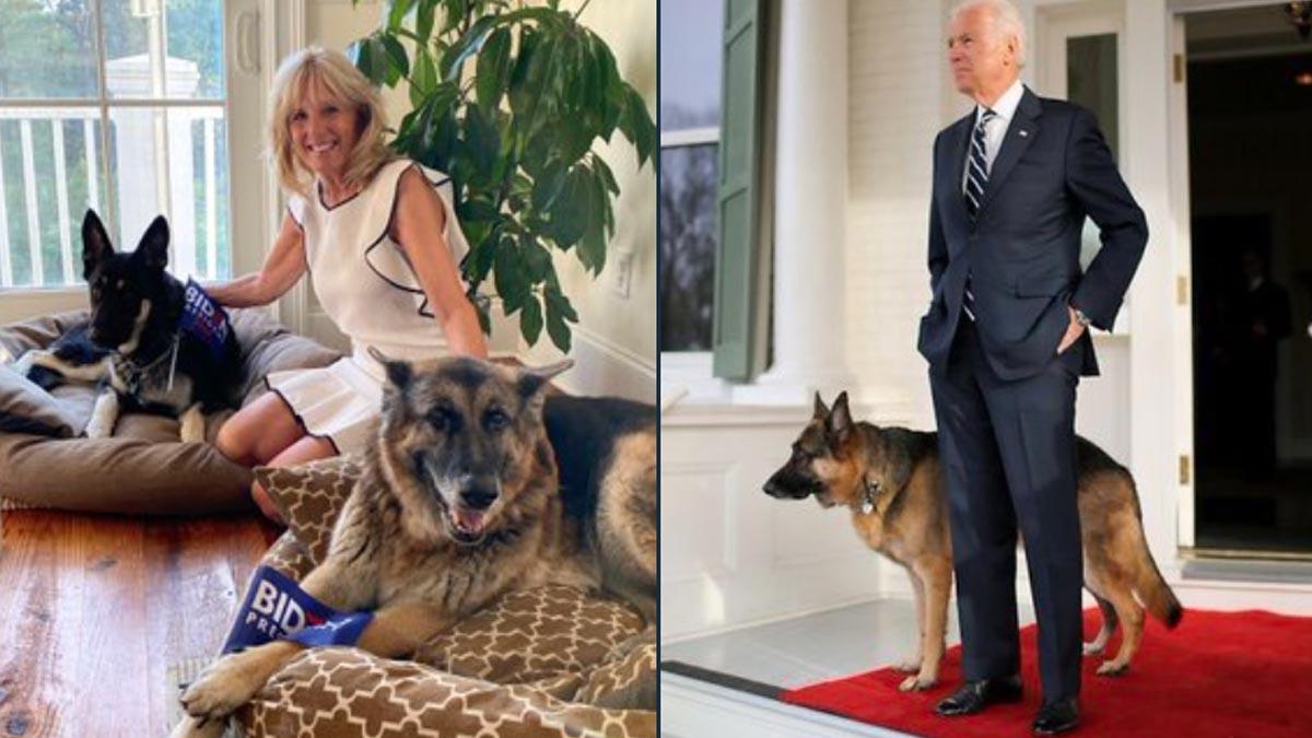 Joe Biden y su mujer posan junto a Champ y Major, la pareja de pastores alemanes propiedad de la pareja presidencial. Foto: @First_Dogs_USA