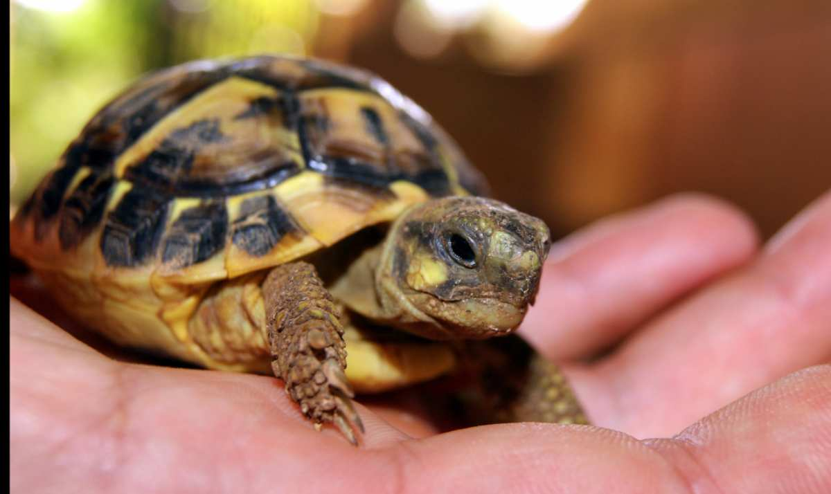 Hábitat de tu tortuga terrestre