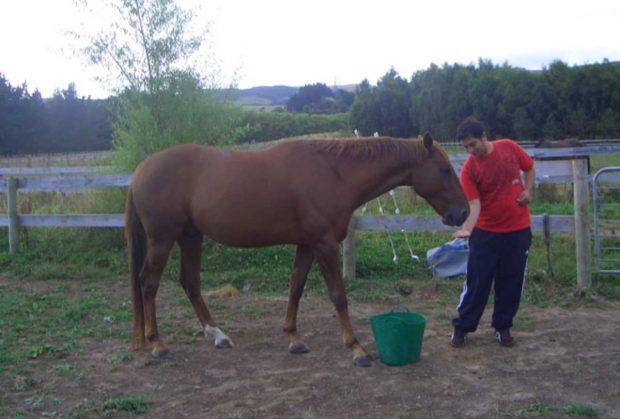 Dando comida al caballo