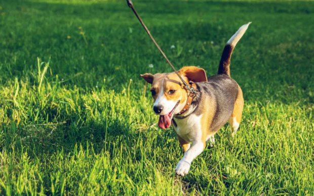 Perro y correa