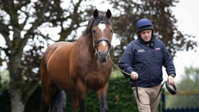 Galileo, el caballo de los 200 millones de euros.